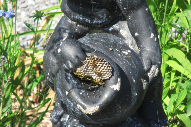 wasp nest July 29