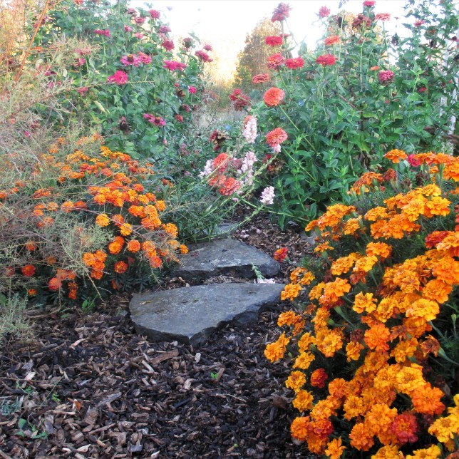 pathway through early fall annuals Oct 8 2017