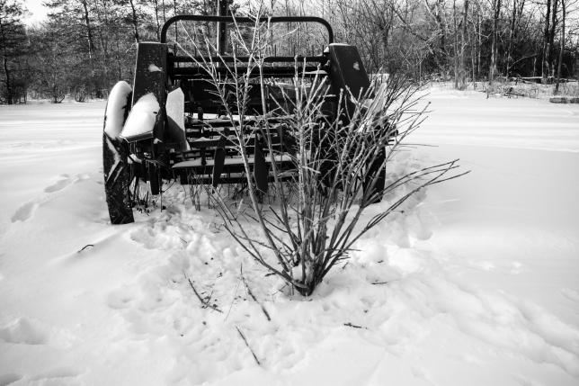 Burning Bush and rabbit damage Jan 14 2018