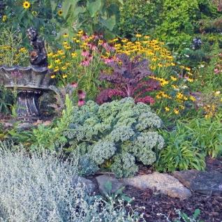 Kale Garden Sept 4 2017