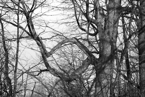 circle branches February 17 2018