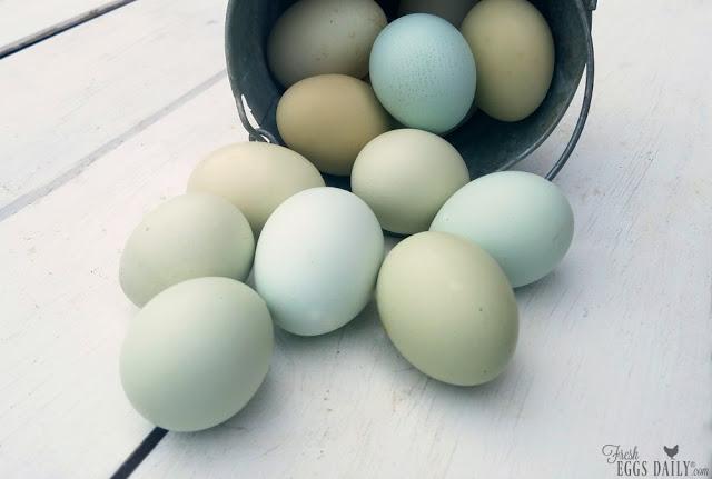 what-makes-blue-eggs-blue