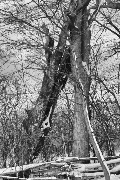 6 on 6 dead tree leaning March 3 2018 small