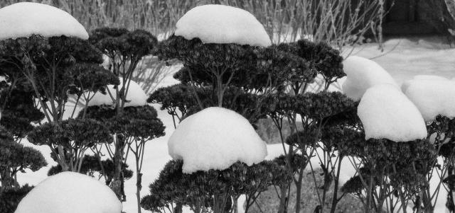 6 on 6 Sedum and Snow March 3 2018