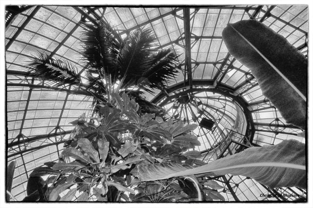 Allan Gardens March 7 2018 looking up