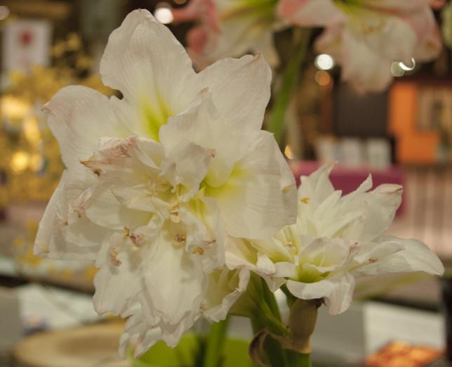 Amaryllis at Canada Blooms 2