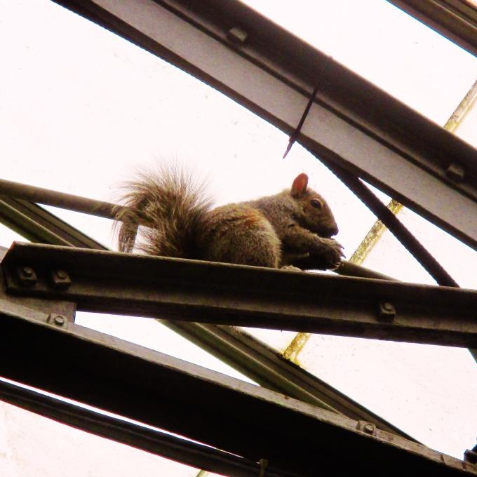 Squirrel at Alan Gardens