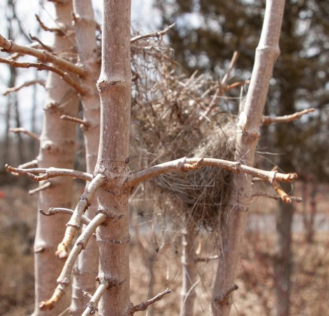 robin's nest April 8 2018