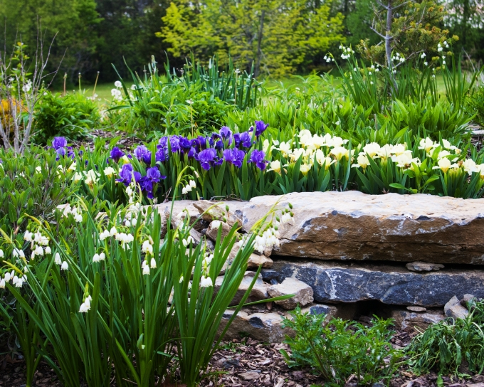 Dwarf Iris and Leucojum May 26 2018 small