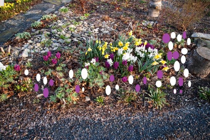 Hyacinth corner May 5 2018 paint 2