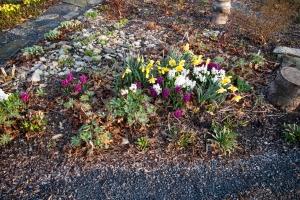 Hyacinth corner May 5 2018