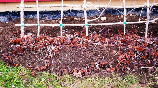Sedum mulch and trellis