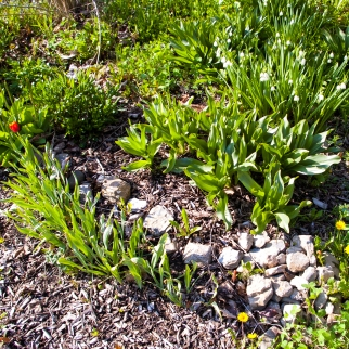 stones showing where to plant bulbs May 16 2018