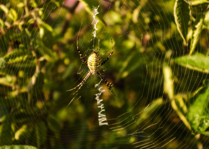 spider Sept 14 2018