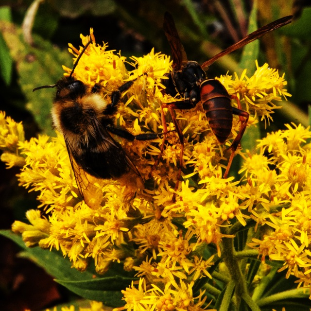 wasp and bee