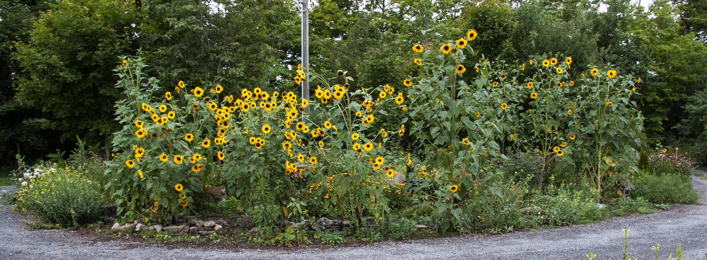 The Island Garden, August 18 2118