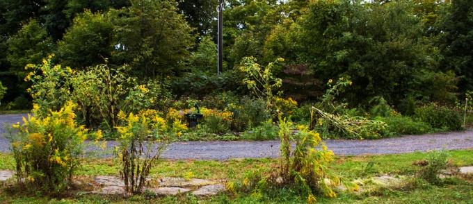 The Island Garden, September 11 2018