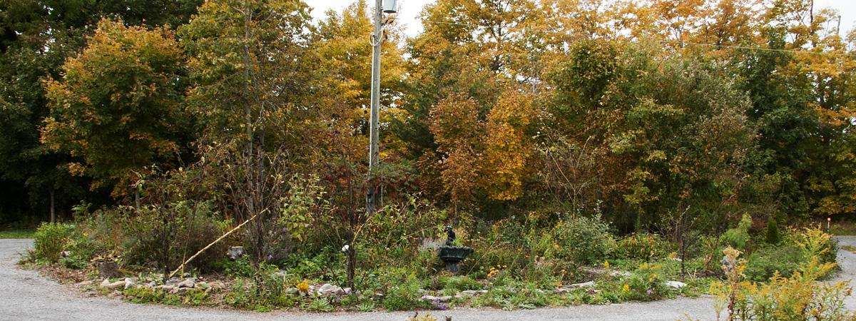 The Island Garden, October 5 2018