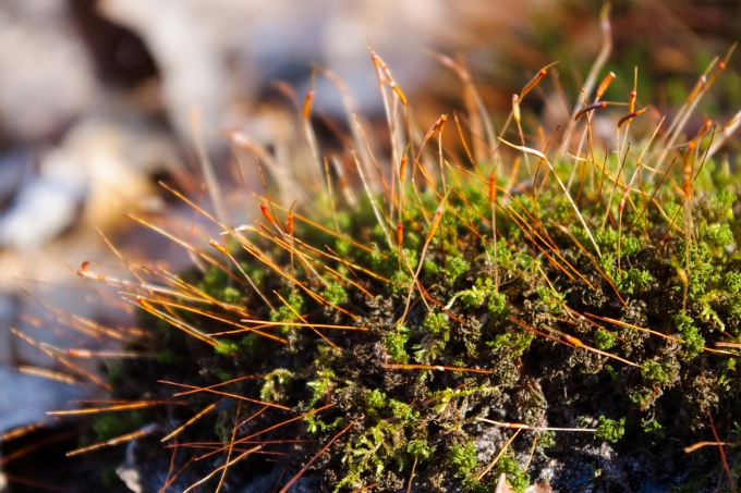 Moss at Frink Conservation Area
