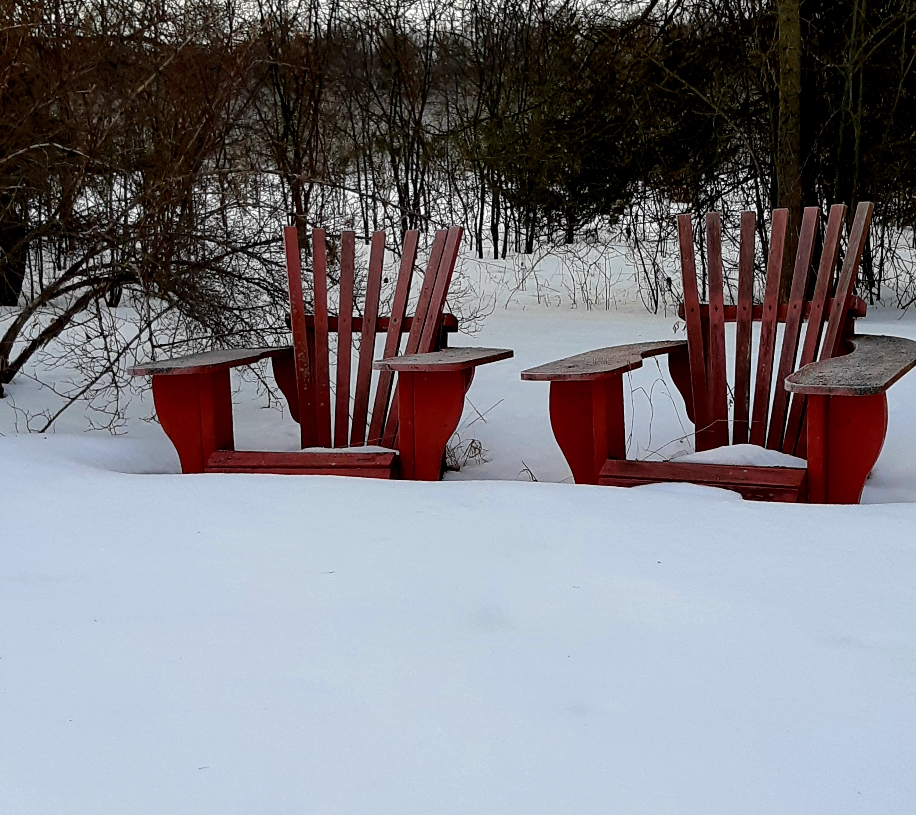 Picture of red Muskoka chairs in the snow