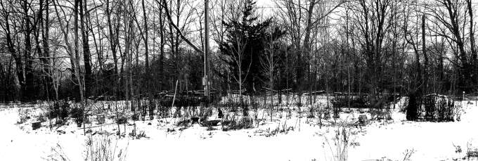 Snow covered Island garden bed January 18 2019 - looks like black and white
