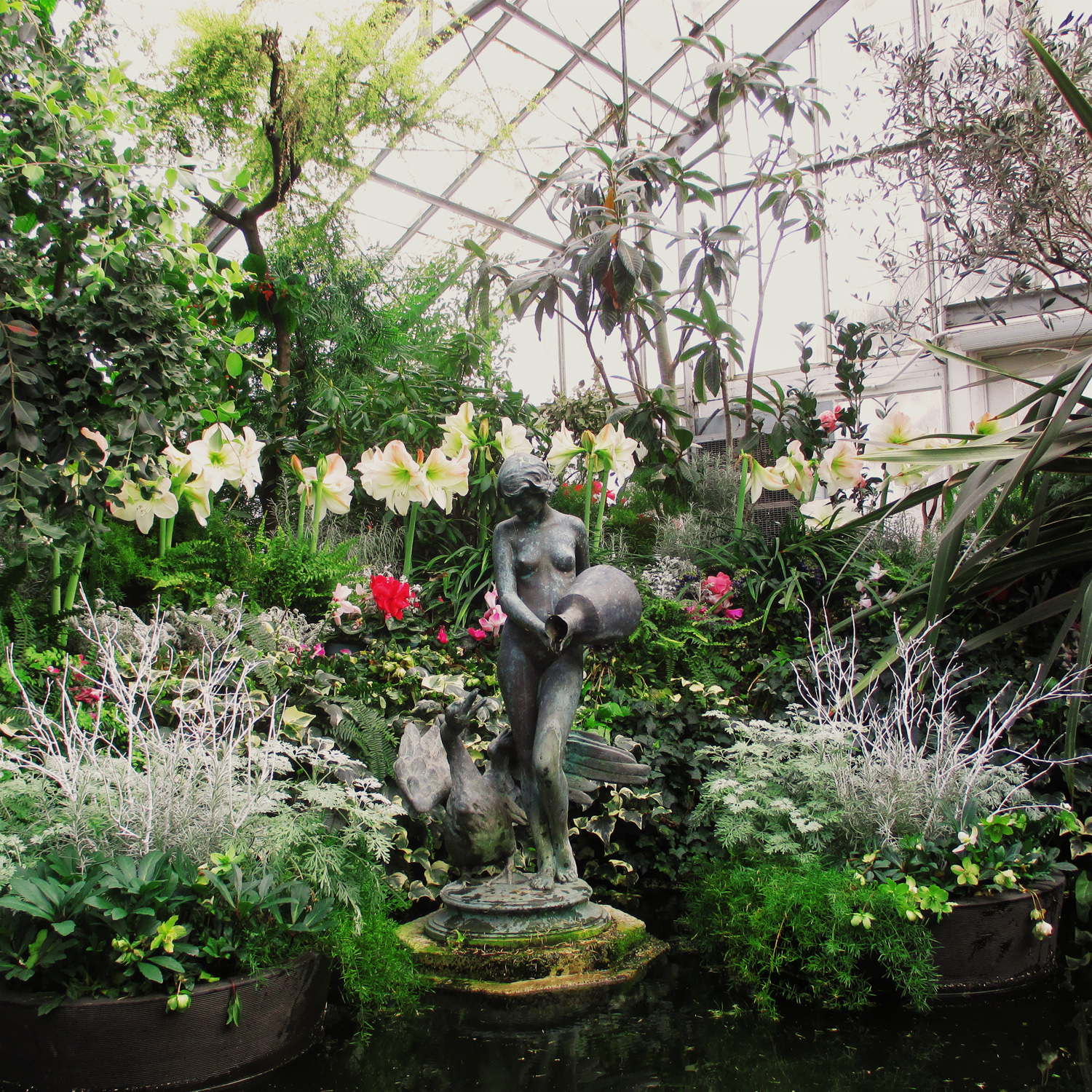 pond in the greenhouse, with a statue of a woman holding an urn in middle.  Surrounded with tropical and sub tropcal plants including a row of tall white Amaryllis
