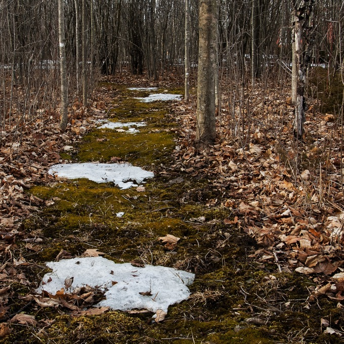 A path through the woods, covered in bright green moss, with patches of snow along the way.