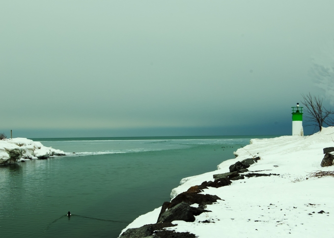 A lone duck swimming up a channel leading to Lake Ontario in winter, snowbanks on shore, a lighthouse with a green stripe in the background.  Dark blue skies.