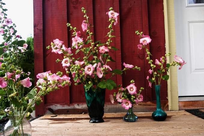 Pink hollyhocks for this week's vase.