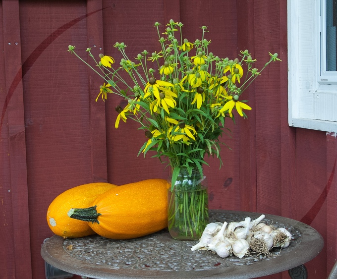 jar of yellow Prairie Cone flowers on a patio table; garlic and squash also on the table